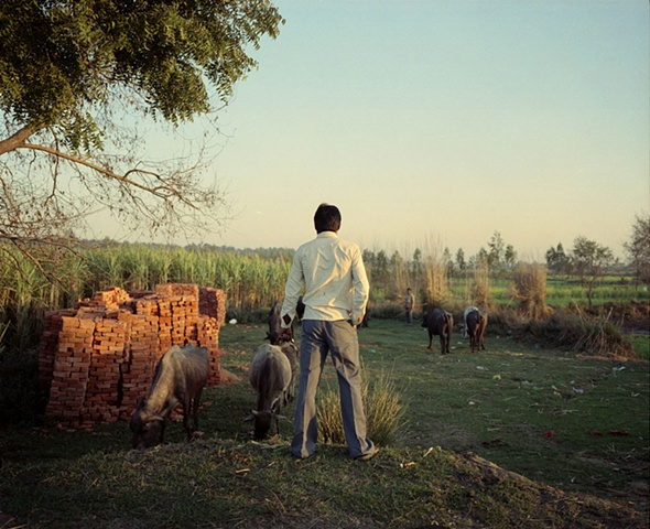 Men and animals; Dhampur, Uttar Pradesh