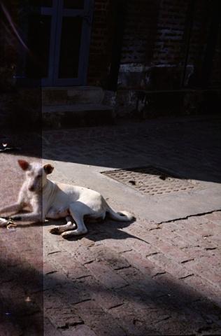 Lazy dog; Dajpur Village, Uttar Pradesh