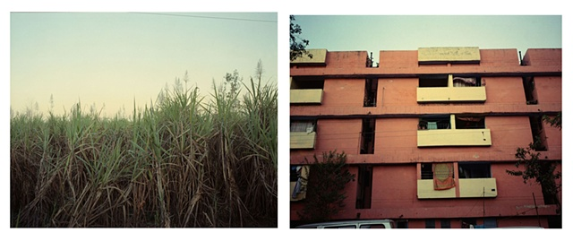 The cane and its croppers; Dhampur, Uttar Pradesh