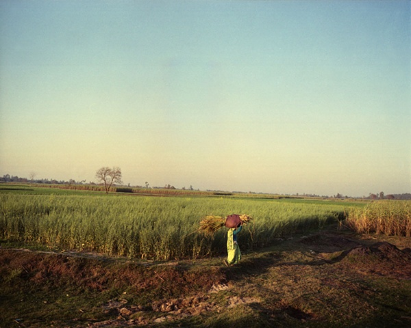 Farmer in green sari; Dhampur, Uttar Pradesh