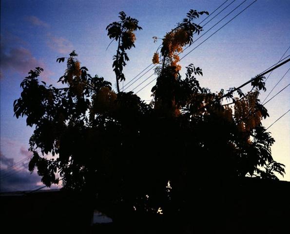 Blue Hour, Capim Grosso, Bahia; 2009