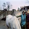 Girls and white horse; Dhampur, Uttar Pradesh