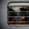 Woman on train; Bikaner, Rajasthan