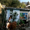 A woman and her cow; Rishikesh, Uttarakhand