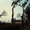Boy in tree; Dhampur, Uttar Pradesh