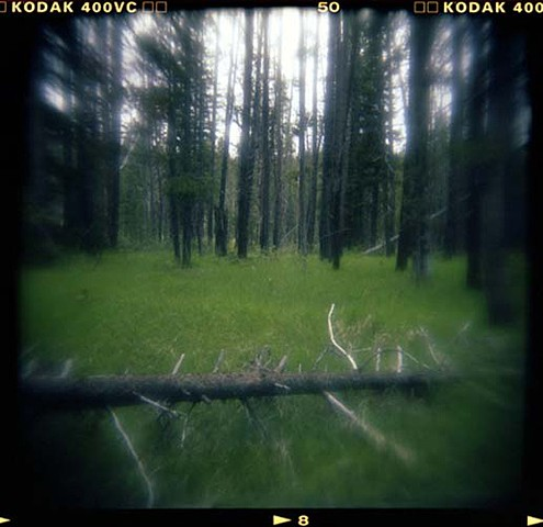 Digitally Printed Holga Landscapes and Animals in Color