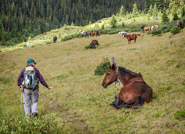Wrangler's Horses Rest by the Trail  Aug 2016