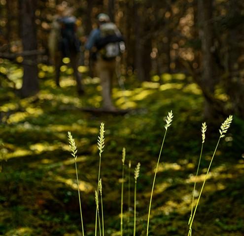 Lit Grasses  Aug 2016