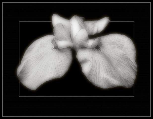Iris  Aug 2012
