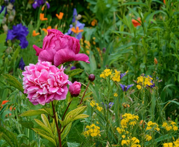 Monet's Garden - Giverny France  May 2014