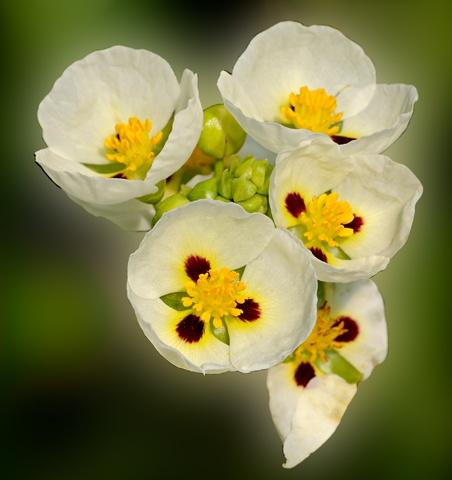 Tiny Blooms  Aug 2012