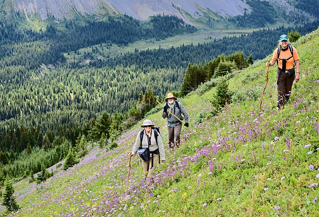 Hiking Across Wildflowers  July 2016