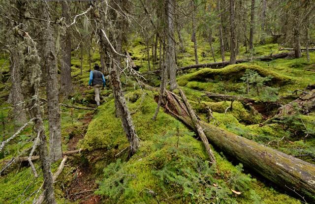 Mossy Trail III