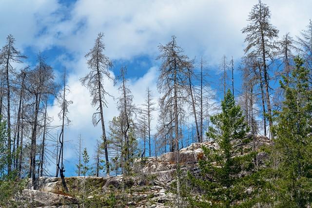 Recent Burn above Cassel Falls