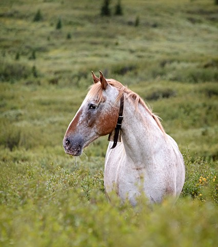 Horse at Pasture