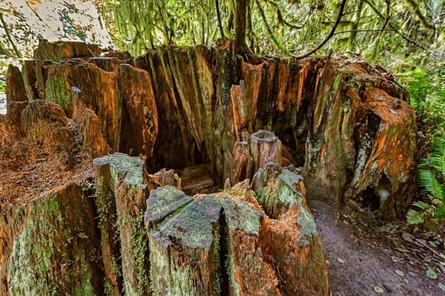 Walk-In Tree Stump  Sep 2016