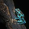 Blue Frog  Nov 2011
