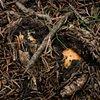 Fungii Rising