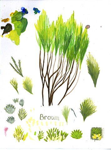 Chapparal Broom