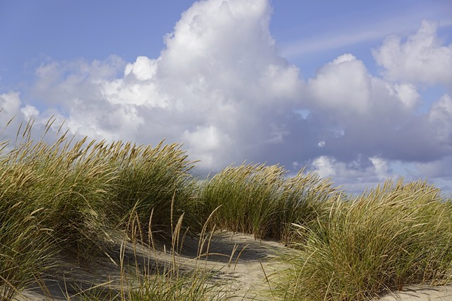 Jutland Beach Grass