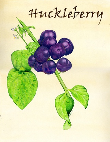 Watercolor of Huckleberry, kitchen watercolor, food watercolor, kitchen print, purple print