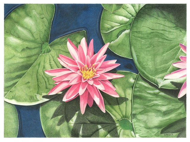 Watercolor of water lilies, pink bloom, water lilies, pink home decor, kelly green home decor