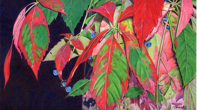Watercolor of Virginia Creeper, Autumn watercolor, Virginia Creeper, fall colors