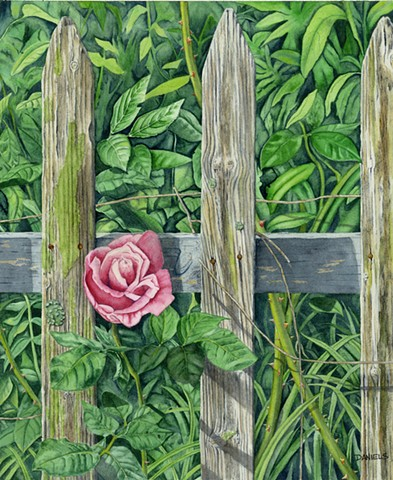 greenery, pink rose watercolor, pink rose print, pink rose through old fence, urban garden, pink rose in city alley way