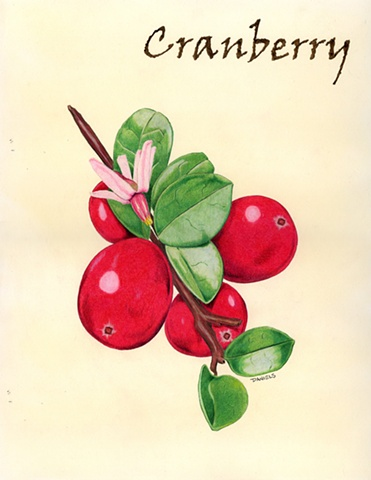 Watercolor of cranberry, kitchen watercolor, food watercolor, fruit watercolor, cranberry