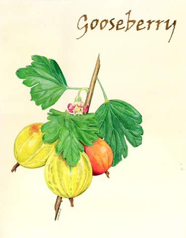 Watercolor of Gooseberry, kitchen watercolor
