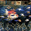 """Aquariums For Darfur"""