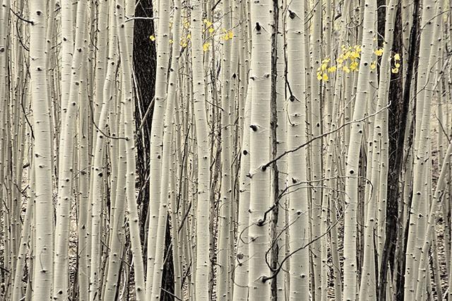 End of the Season, White Mountains, AZ