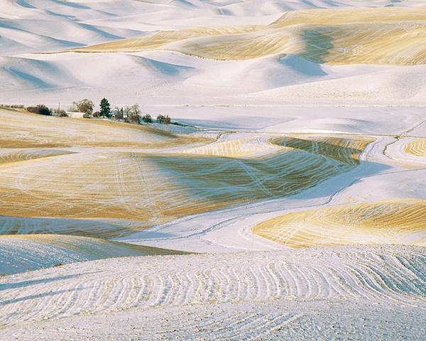 Palouse Winter