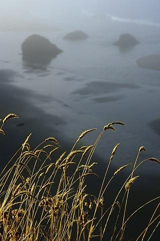 Grass, Mendocino Coast