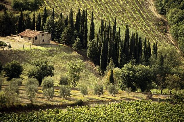 Tuscany Landscape, Near Radda