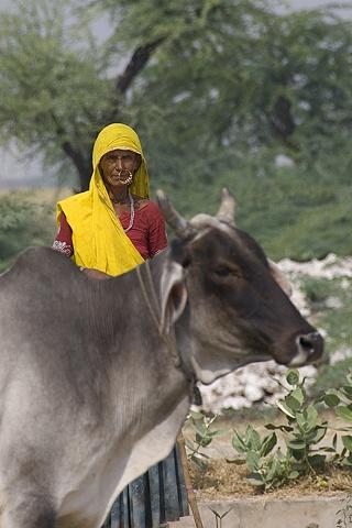 Woman With Brahma Bull
