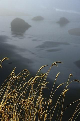 Grass, Mendocino Coast, CA