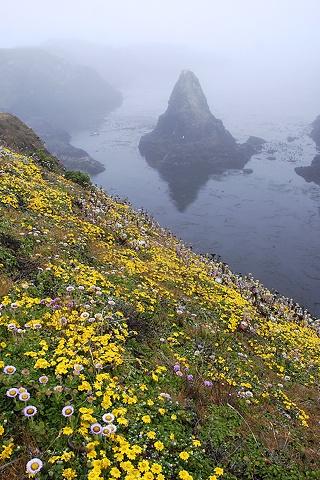 Coastal Flowers and Fog