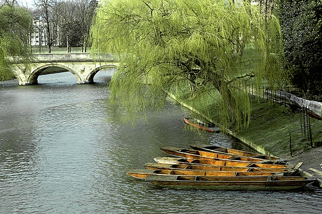 Bridge Over the Cam, University of Cambridge