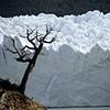 Moreno Glacier Advancing, Patagonia