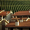 Roofs and Vineyard, Greve