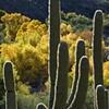 December in Sabino Canyon, Tucson, AZ