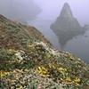 Coastal Fog, Mendocino, CA