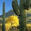 Change of Seasons, Sabino Canyon, Tucson, AZ