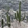 Winter Morning, Tucson, AZ