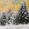 Season's Changing, Telluride, CO