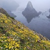 Coastal Flowers and Fog