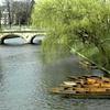 Bridge Over the Cam, University of Cambridge