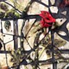 Broken Rosebush (detail)