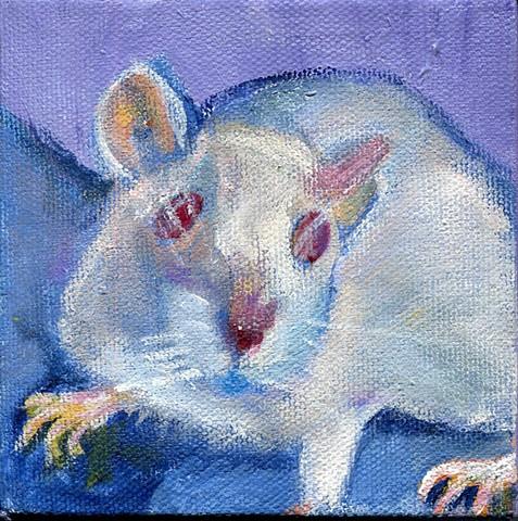 Izzy Bee the Rat